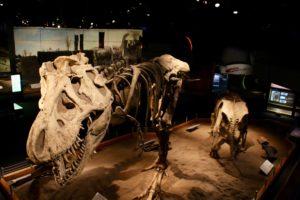 Royal Tyrrell Museum of Paleontology