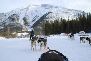 Where to experience the best dog sledding in Canada