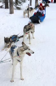 Dog Sledding experience in Banff, Alberta, Canada