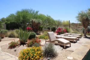 Scottsdale, Arizona in the spring, full bloom!