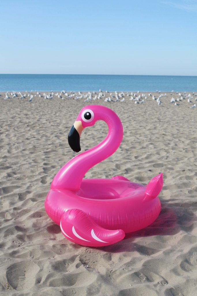 Be a flamingo in a flock of gulls