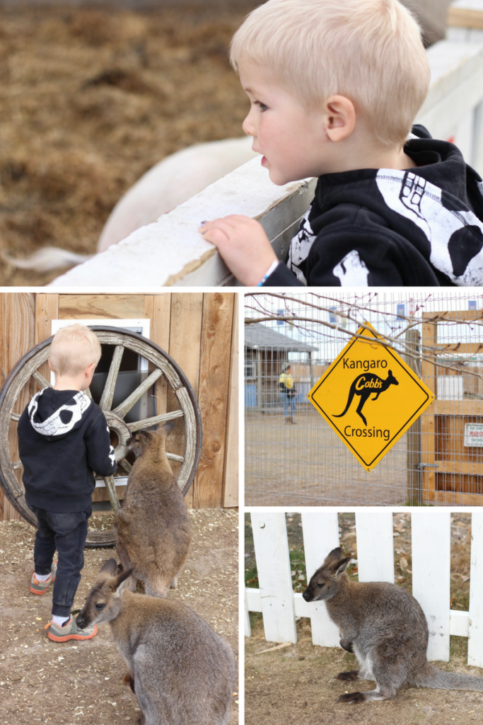 Halloween Adventure Fun- Pumpkin Patch & Corn Maze - Calgary, Alberta